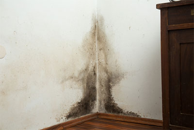 Mold Inspection in Portland, OR   Mold Testing Service