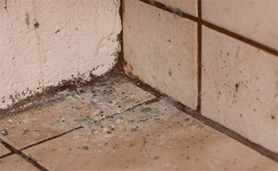 mold on tile and wall